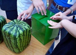 Бизнес-идея: выращивание арбузов