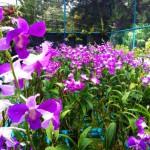 Бизнес-идея: питомник орхидей